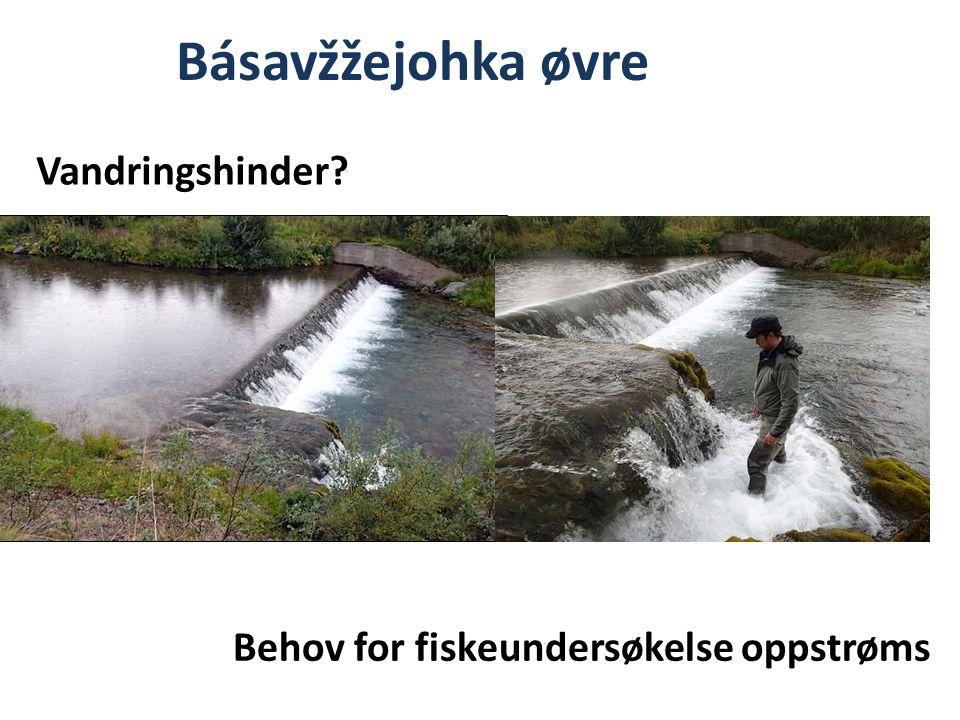 Básavžžejohka øvre Behov for fiskeundersøkelse oppstrøms Vandringshinder