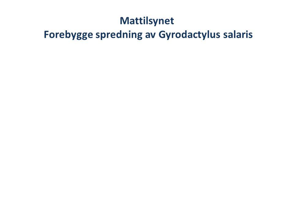 Mattilsynet Forebygge spredning av Gyrodactylus salaris