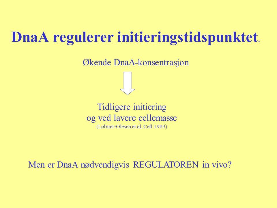 DnaA regulerer initieringstidspunktet. Økende DnaA-konsentrasjon Tidligere initiering og ved lavere cellemasse (Løbner-Olesen et al, Cell 1989) Men er