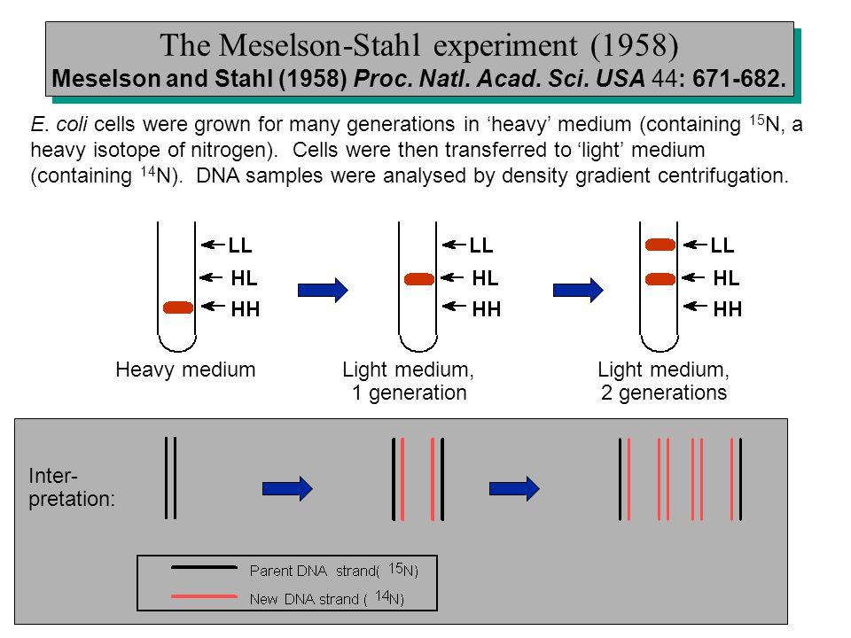 Hvilke oppgaver må løses under DNA replikasjon.