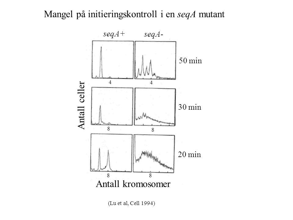 Antall kromosomer 88 8 8 4 4 Antall celler 50 min 30 min 20 min Mangel på initieringskontroll i en seqA mutant seqA+ seqA- (Lu et al, Cell 1994)