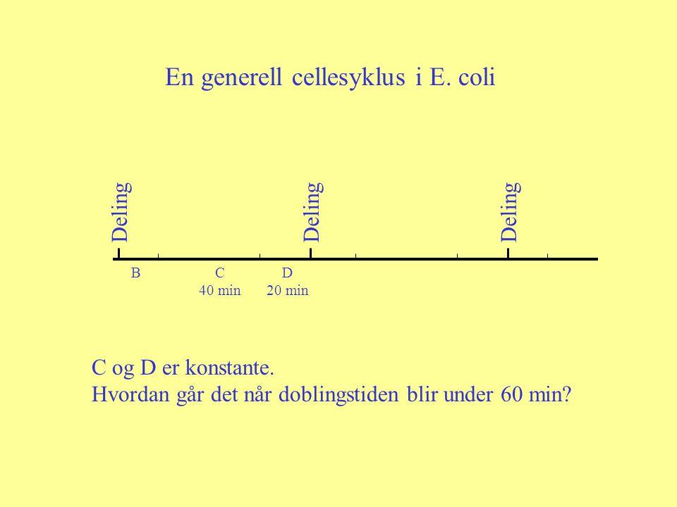 Deling BC 40 min D 20 min En generell cellesyklus i E. coli C og D er konstante. Hvordan går det når doblingstiden blir under 60 min?