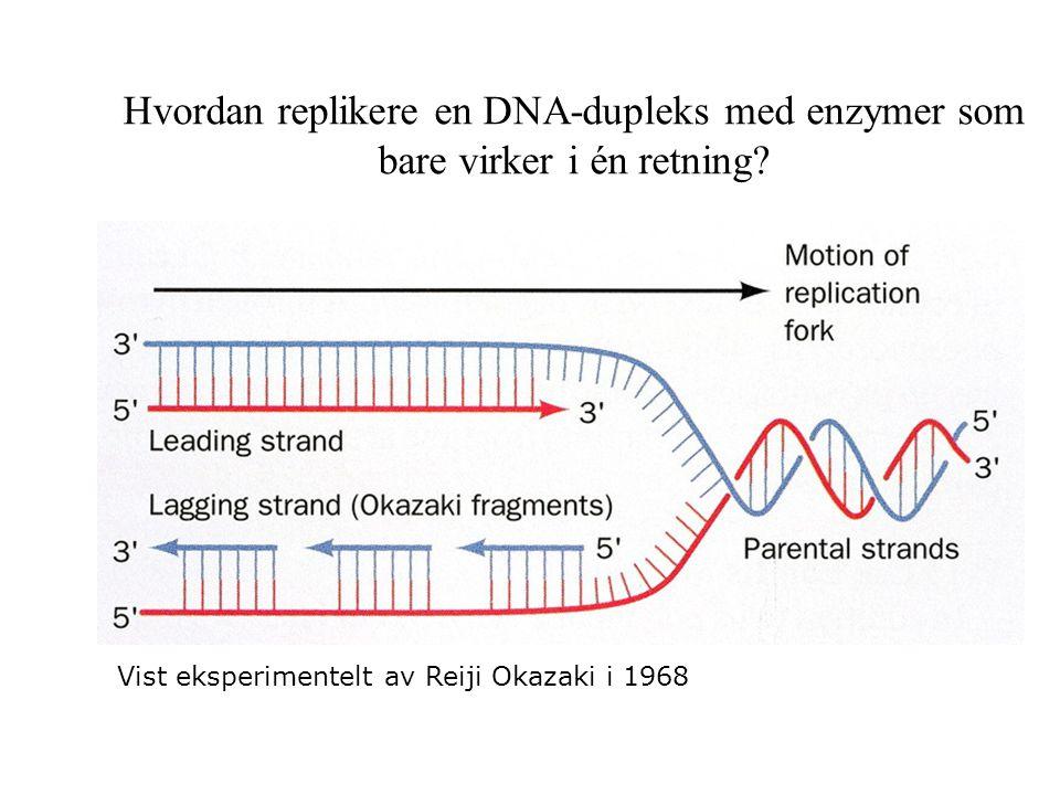 Hvordan replikere en DNA-dupleks med enzymer som bare virker i én retning? Vist eksperimentelt av Reiji Okazaki i 1968