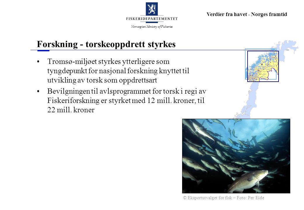 Norwegian Ministry of Fisheries Verdier fra havet - Norges framtid Forskning - torskeoppdrett styrkes Tromsø-miljøet styrkes ytterligere som tyngdepunkt for nasjonal forskning knyttet til utvikling av torsk som oppdrettsart Bevilgningen til avlsprogrammet for torsk i regi av Fiskeriforskning er styrket med 12 mill.