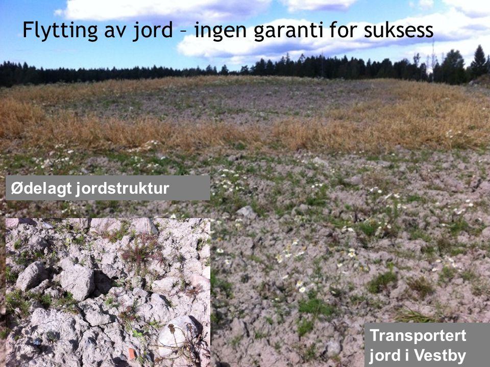 Flytting av jord – ingen garanti for suksess Ødelagt jordstruktur Transportert jord i Vestby