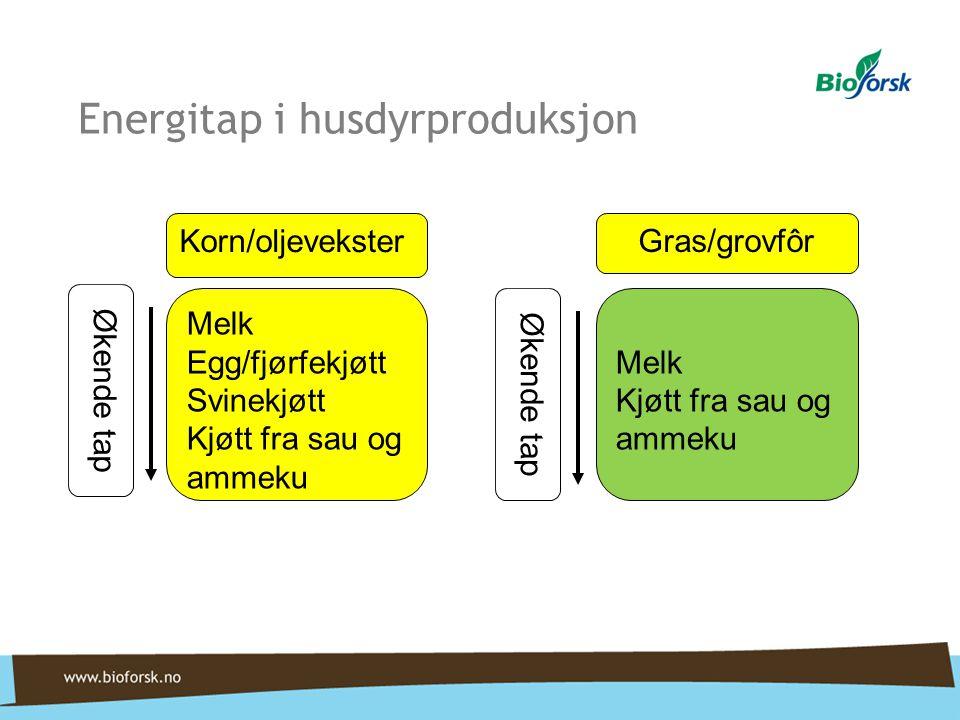 Energitap i husdyrproduksjon Melk Egg/fjørfekjøtt Svinekjøtt Kjøtt fra sau og ammeku Korn/oljevekster Økende tap Melk Kjøtt fra sau og ammeku Gras/gro