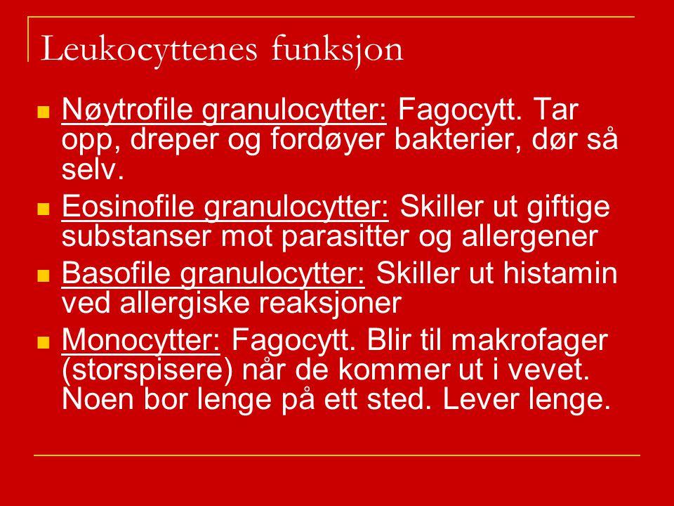 Leukocyttenes funksjon Nøytrofile granulocytter: Fagocytt.