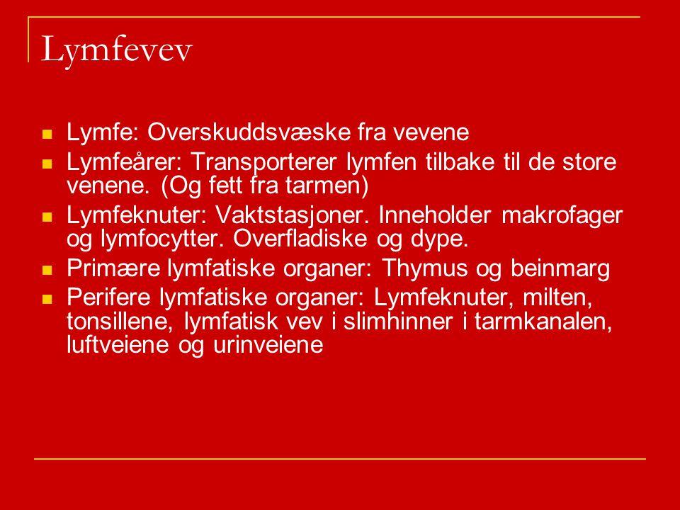 Lymfevev Lymfe: Overskuddsvæske fra vevene Lymfeårer: Transporterer lymfen tilbake til de store venene.