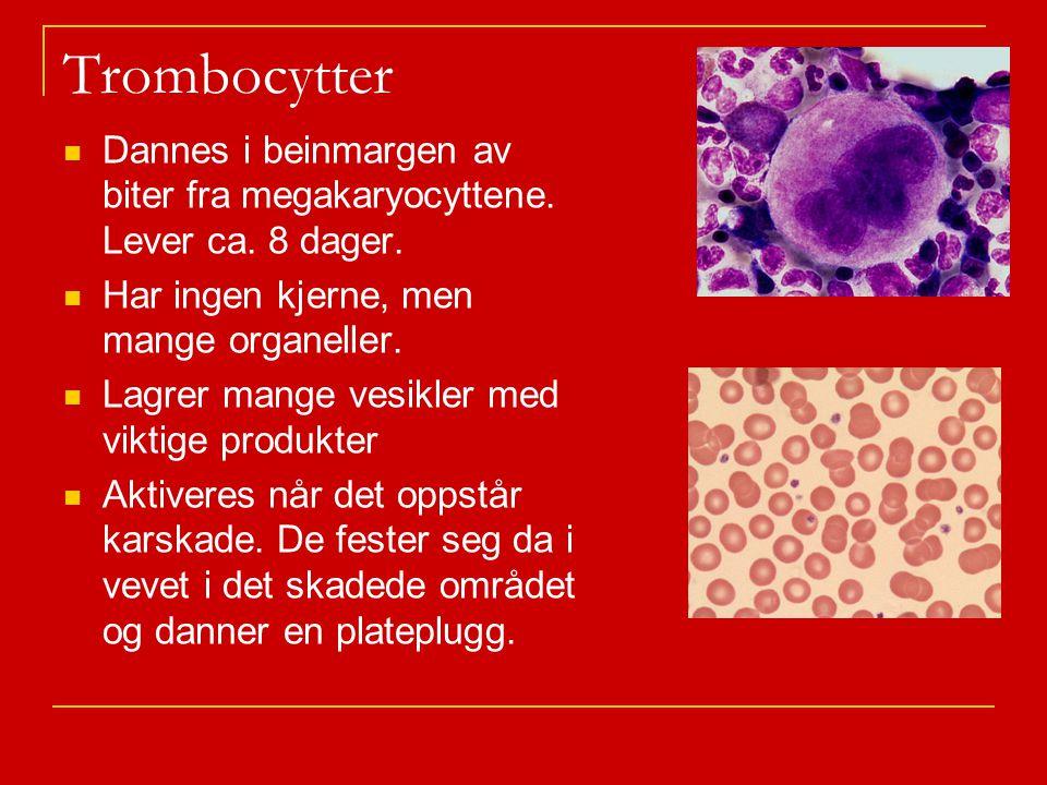 Trombocytter Dannes i beinmargen av biter fra megakaryocyttene.
