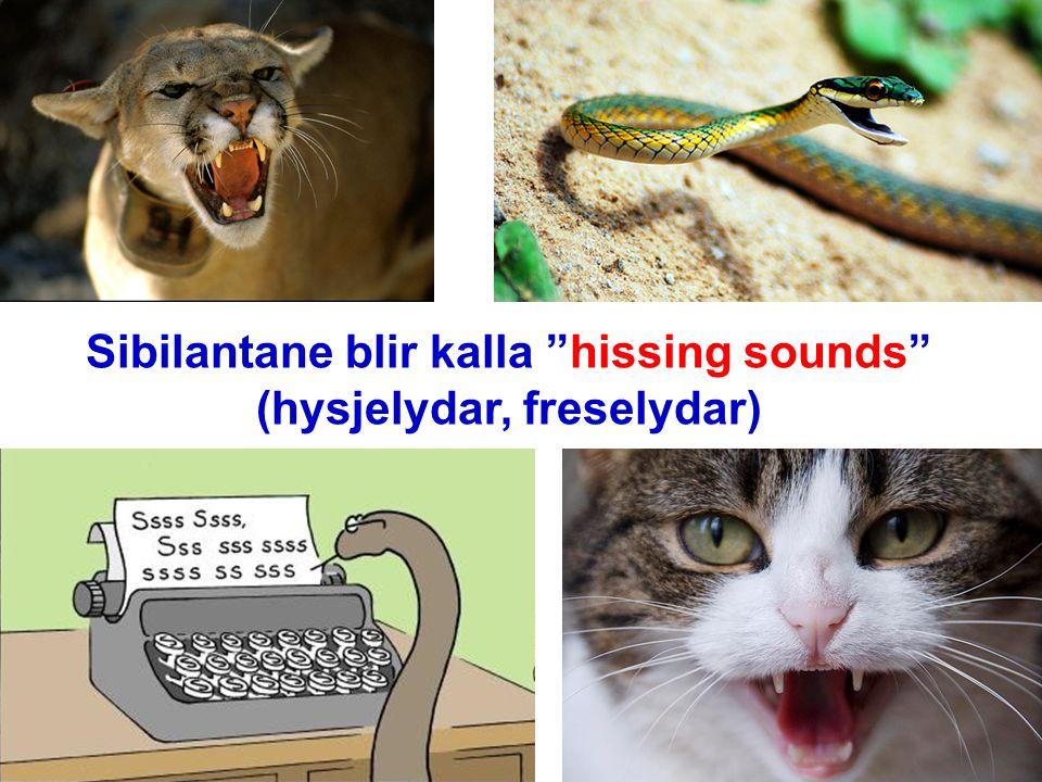 """Sibilantane blir kalla """"hissing sounds"""" (hysjelydar, freselydar)"""