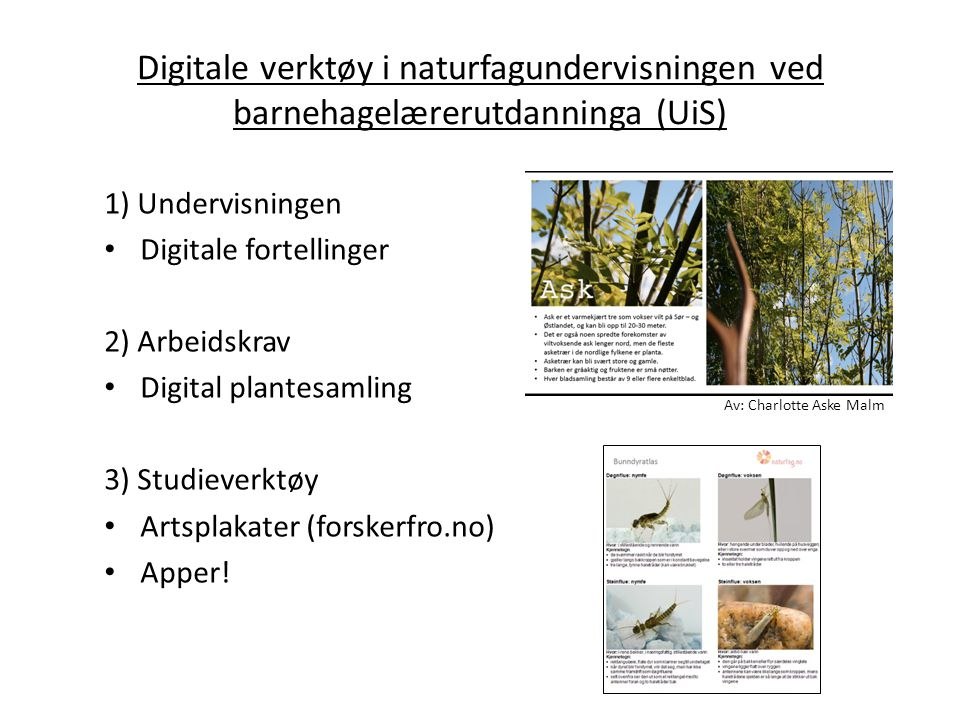 Digitale verktøy i naturfagundervisningen ved barnehagelærerutdanninga (UiS) 1) Undervisningen Digitale fortellinger 2) Arbeidskrav Digital plantesaml