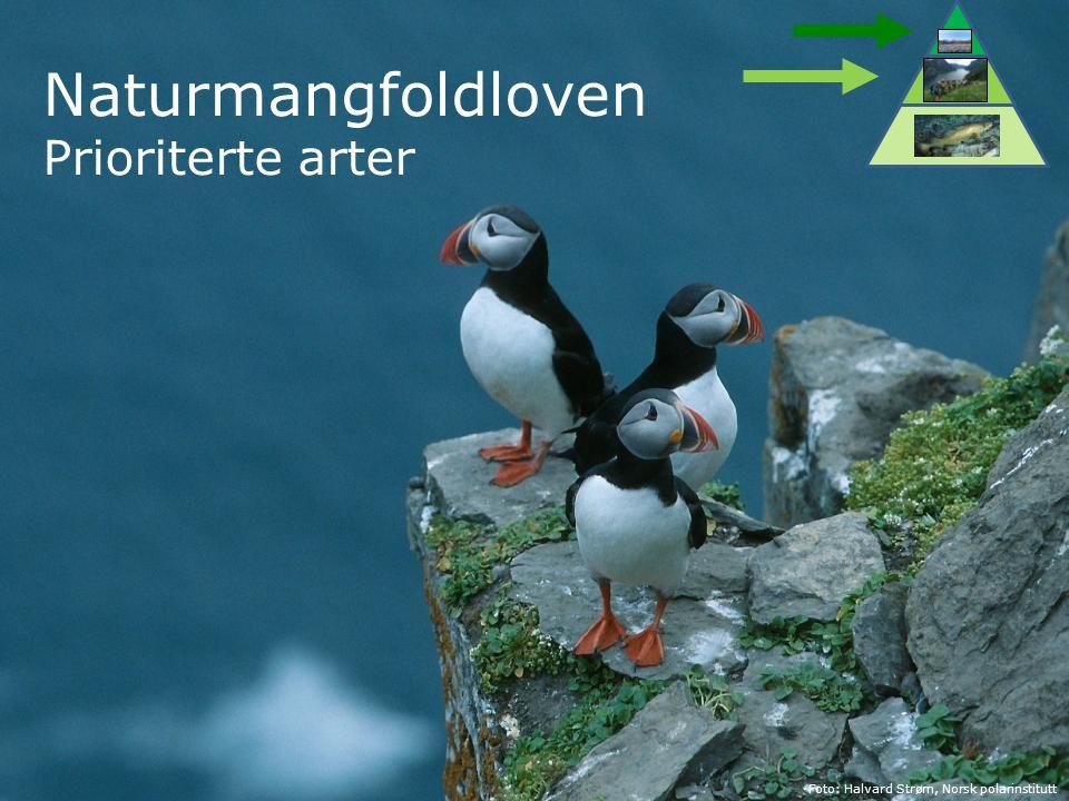 Naturmangfoldloven Prioriterte arter Foto: Halvard Strøm, Norsk polarinstitutt