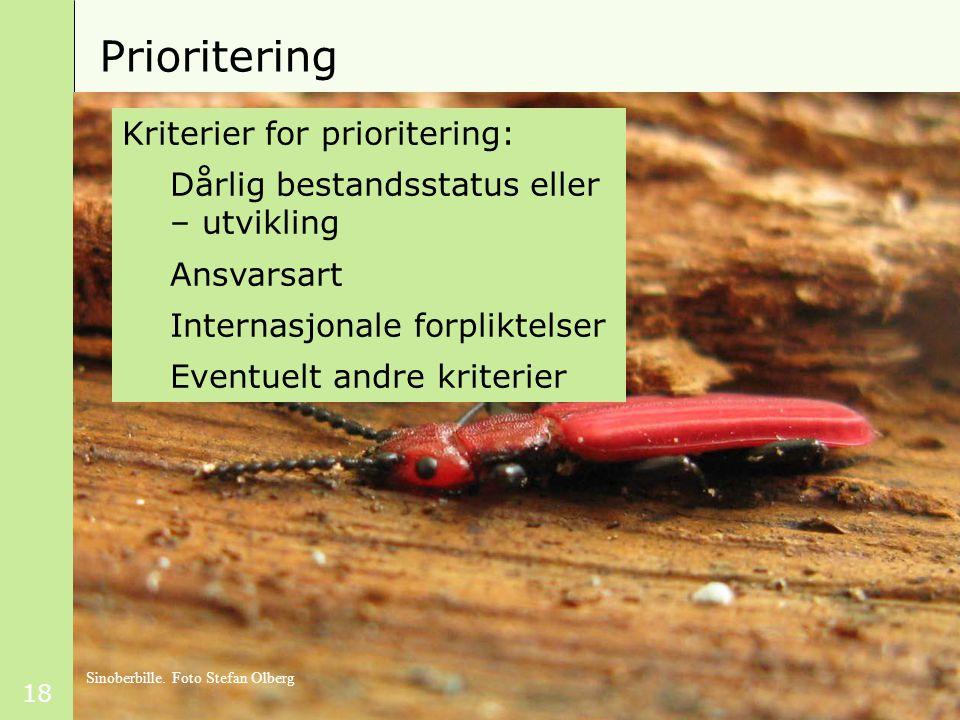 18 Prioritering Kriterier for prioritering: Dårlig bestandsstatus eller – utvikling Ansvarsart Internasjonale forpliktelser Eventuelt andre kriterier Sinoberbille.