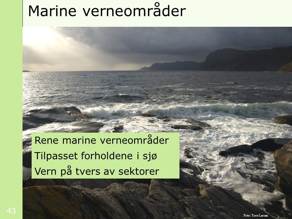 43 Marine verneområder Rene marine verneområder Tilpasset forholdene i sjø Vern på tvers av sektorer Foto: Tore Larsen