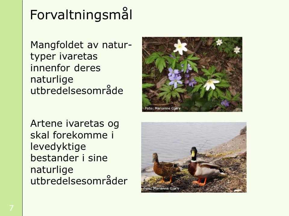 38 Mål for områdevern Lovbestemte mål Naturverdier Målets betydning for vernet Foto: Tore Larsen