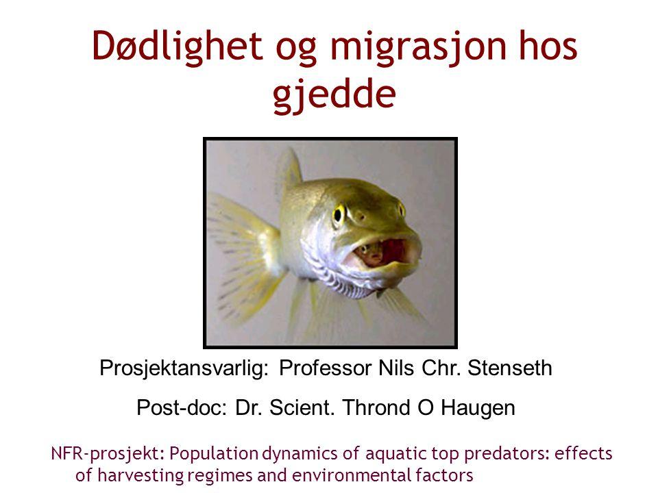 Dødlighet og migrasjon hos gjedde NFR-prosjekt: Population dynamics of aquatic top predators: effects of harvesting regimes and environmental factors Prosjektansvarlig: Professor Nils Chr.