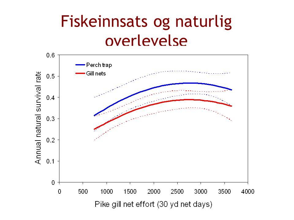Fiskeinnsats og naturlig overlevelse