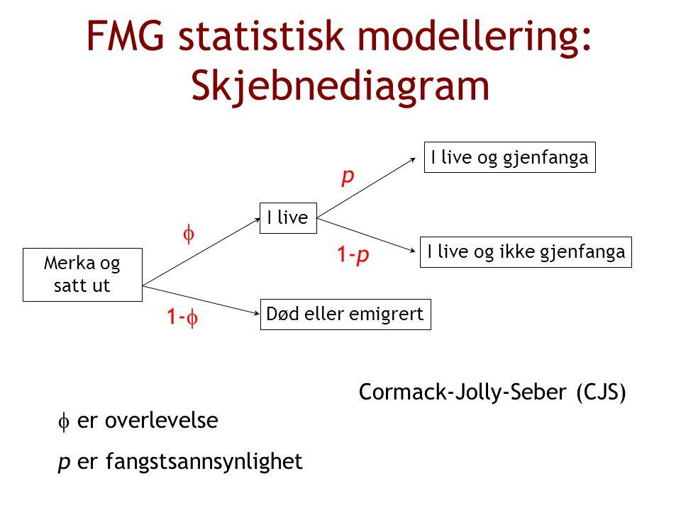 FMG statistisk modellering: Skjebnediagram Merka og satt ut Død eller emigrert I live 1-p p 1-   I live og gjenfanga I live og ikke gjenfanga  er overlevelse p er fangstsannsynlighet Cormack-Jolly-Seber (CJS)