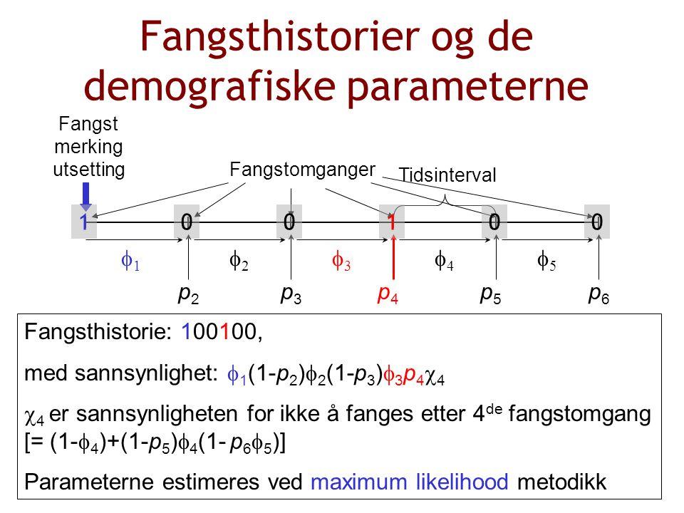Fangsthistorier og de demografiske parameterne Fangst merking utsetting 11 55 44 33 22 Tidsinterval p2p2 p5p5 p4p4 p3p3 p6p6 Fangsthistorie: 100100, med sannsynlighet:  1 (1-p 2 )  2 (1-p 3 )  3 p 4  4  4 er sannsynligheten for ikke å fanges etter 4 de fangstomgang [= (1-  4 )+(1-p 5 )  4 (1- p 6  5 )] Parameterne estimeres ved maximum likelihood metodikk Fangstomganger 100001