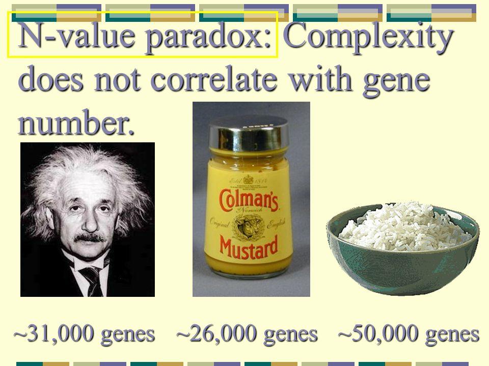 Genomstørrelser – hvor mange gener?