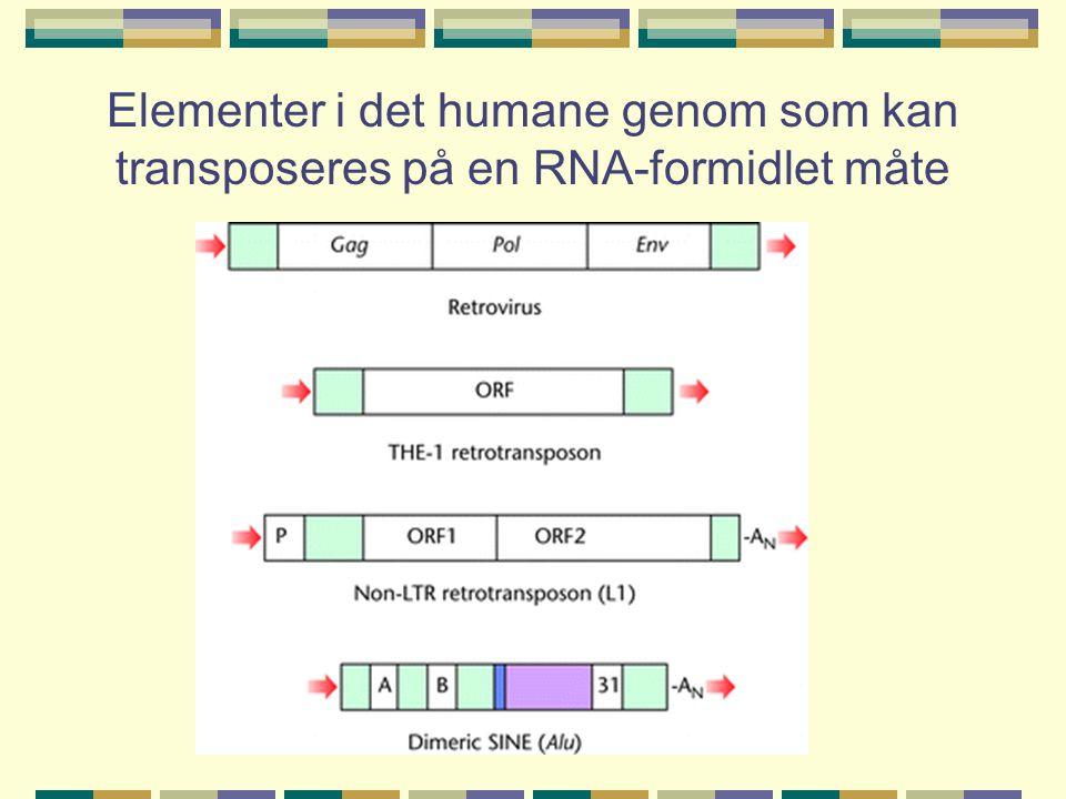 Klasser av intersperserte repetisjoner i det humane genom