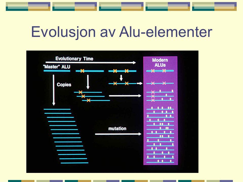 Sekvenssammenstilling av Alu-familier 14 Alu-familier hos mennesket, hvorav 1 ikke hos andre primater. 2000 Alu- insersjoner spesifikke for mennesket.