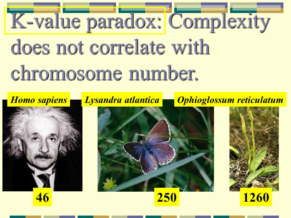 K-value paradox: Complexity does not correlate with chromosome number.