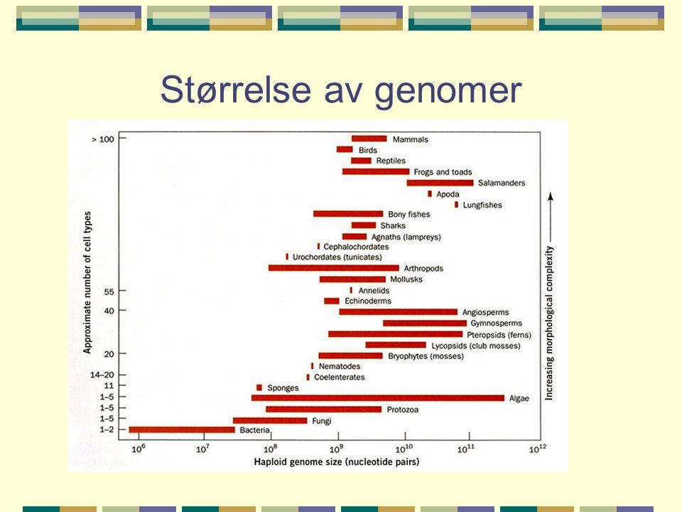 Størrelse av genomer
