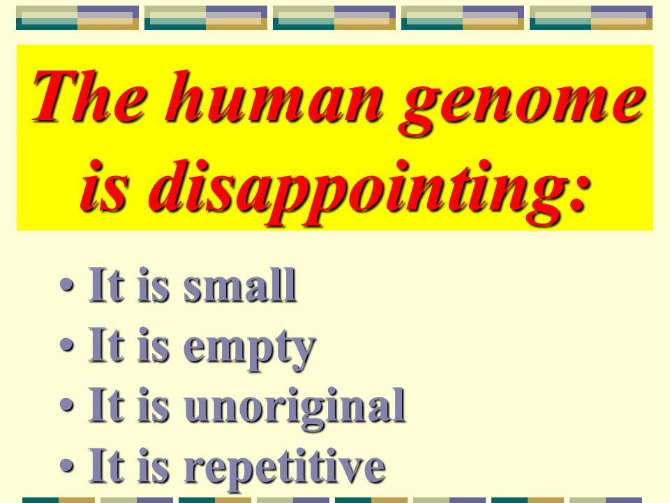 Forskjeller i geninhold Fibroblastvekstfaktor – menneske 30, bananflue og orm 2 hver Transformerende vekstfaktor β – menneske 42, bananflue 9, orm 6 Gener som koder for proteiner med immunglobulindomener – menneske 765, bananflue 140, orm 64 Sinkfinger -proteiner – menneske dobbelt så mange som bananflue og 5 ganger flere enn orm
