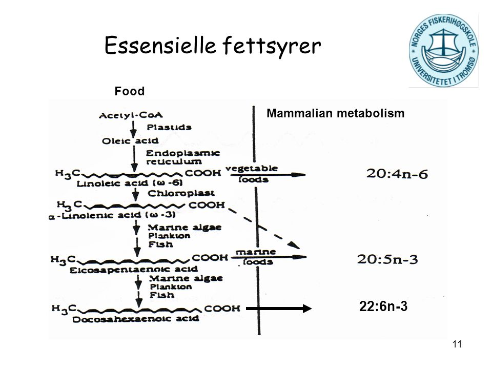 11 Essensielle fettsyrer Mammalian metabolism Food 22:6n-3