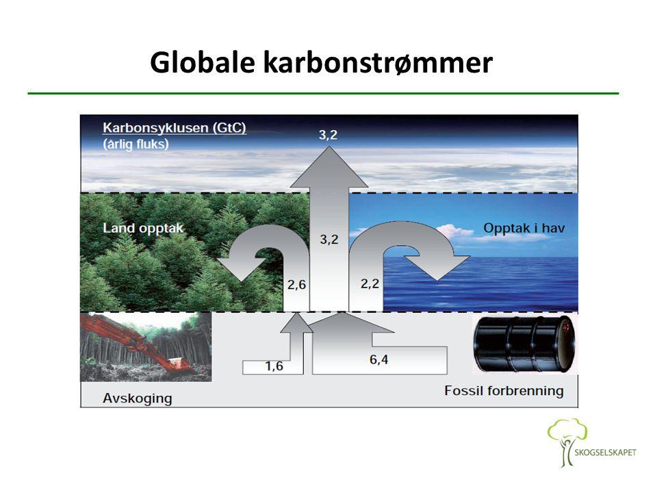 Seier i Stortinget takket være KrF Det er et historisk vedtak – nesten en sensasjon – at Stortinget utstyrer Klima- og miljødepartementet med et oppdrag om å plante skog som en del av klimapolitikken.