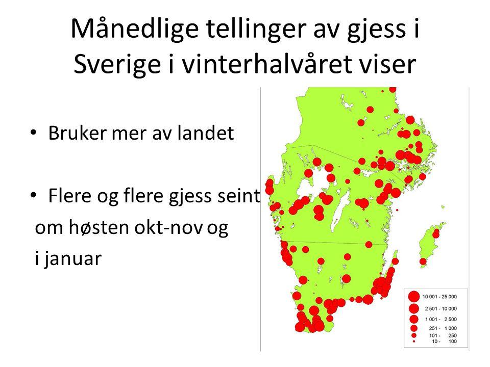 Månedlige tellinger av gjess i Sverige i vinterhalvåret viser Bruker mer av landet Flere og flere gjess seint om høsten okt-nov og i januar