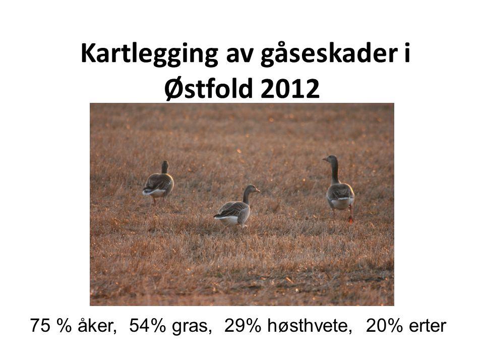 Kartlegging av gåseskader i Østfold 2012 75 % åker, 54% gras, 29% høsthvete, 20% erter