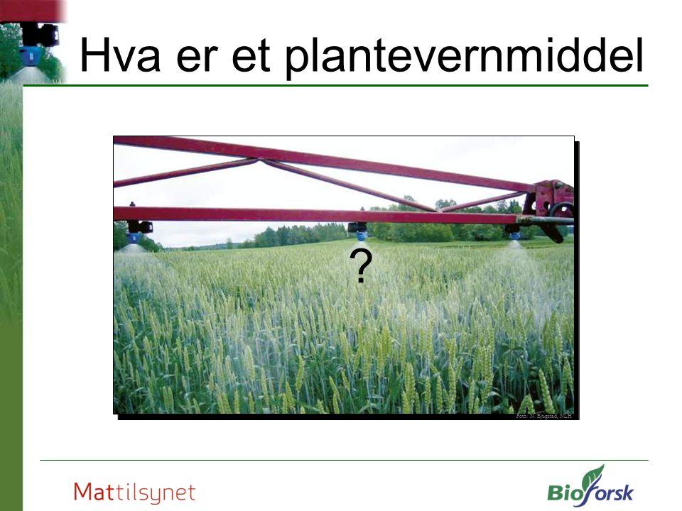 Hva er et plantevernmiddel Foto: N. Bjugstad, NLH ?