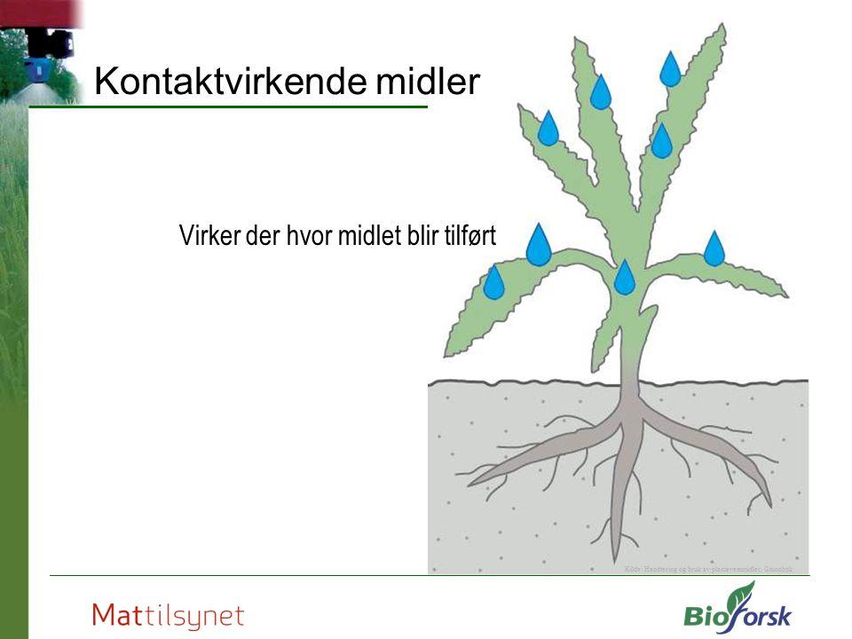 Kontaktvirkende midler Virker der hvor midlet blir tilført Kilde: Handtering og bruk av plantevernmidler, Grunnbok