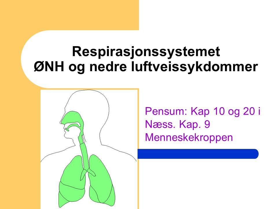 Respirasjonssystemet ØNH og nedre luftveissykdommer Pensum: Kap 10 og 20 i Næss. Kap. 9 Menneskekroppen