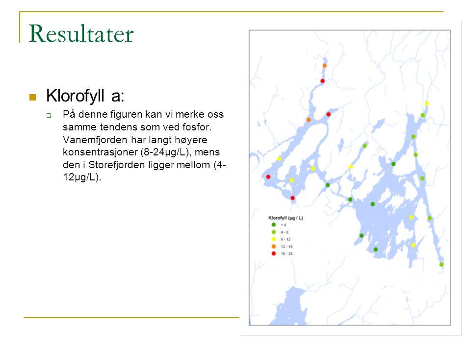 Resultater Klorofyll a:  På denne figuren kan vi merke oss samme tendens som ved fosfor. Vanemfjorden har langt høyere konsentrasjoner (8-24µg/L), me