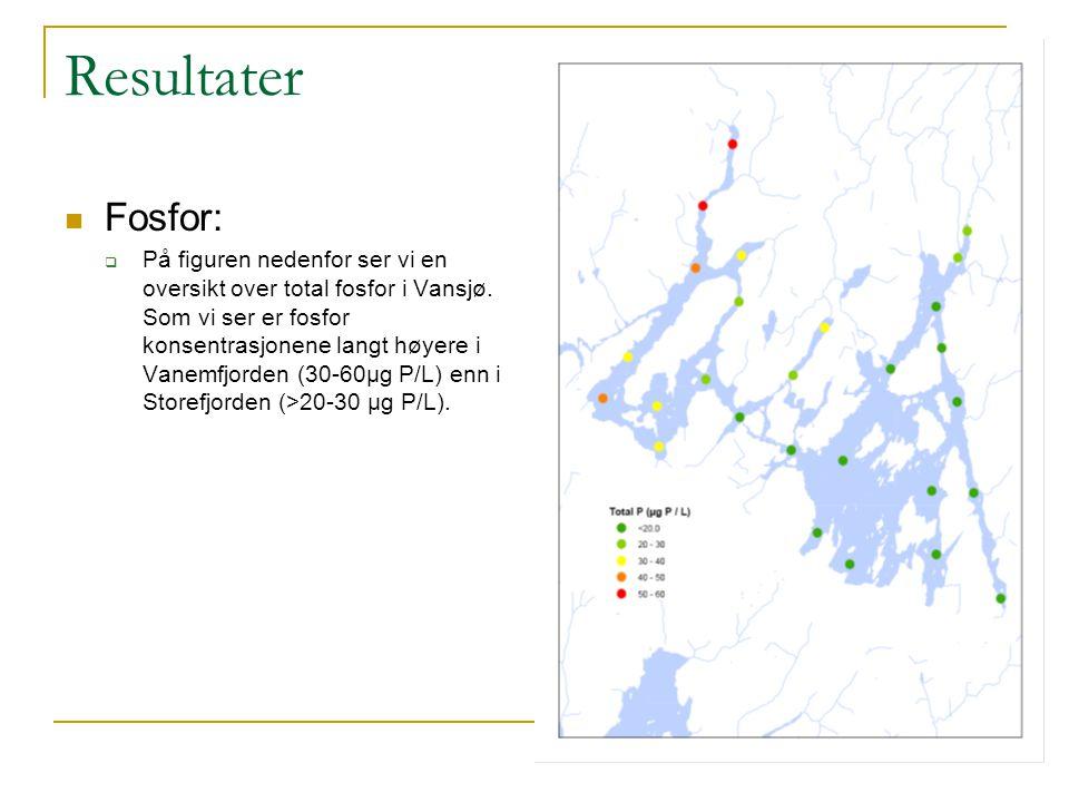 Resultater Fosfor:  På figuren nedenfor ser vi en oversikt over total fosfor i Vansjø. Som vi ser er fosfor konsentrasjonene langt høyere i Vanemfjor
