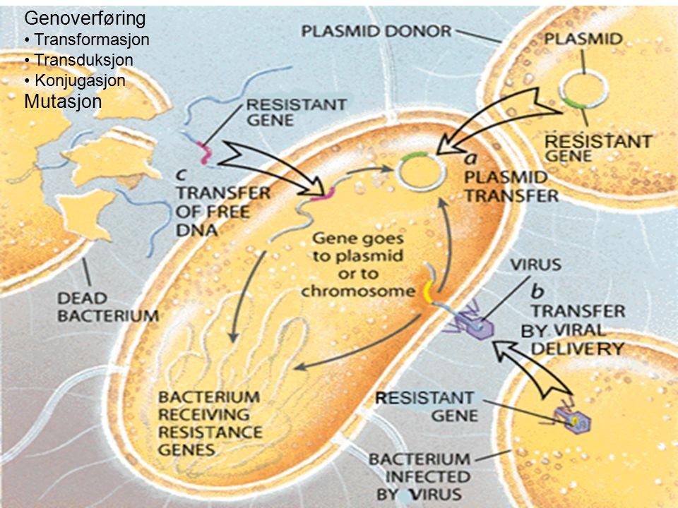 Biokjemisk grunnlag for resistens Endret målmolekyl AB-inaktiverende enzymer Nedsatt opptak av AB hos mikroben