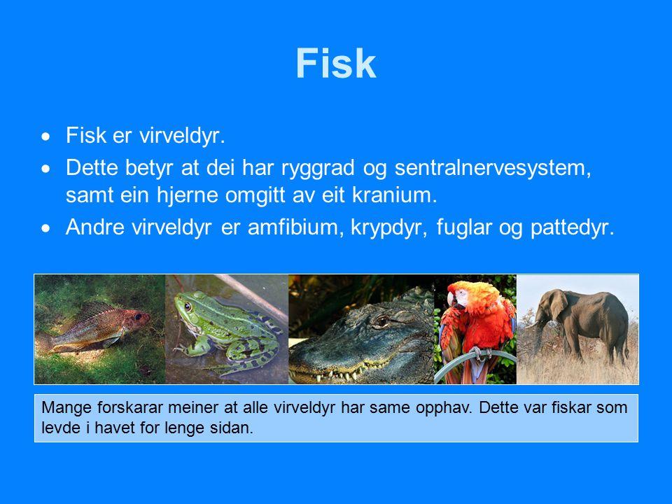  Fisk er virveldyr.