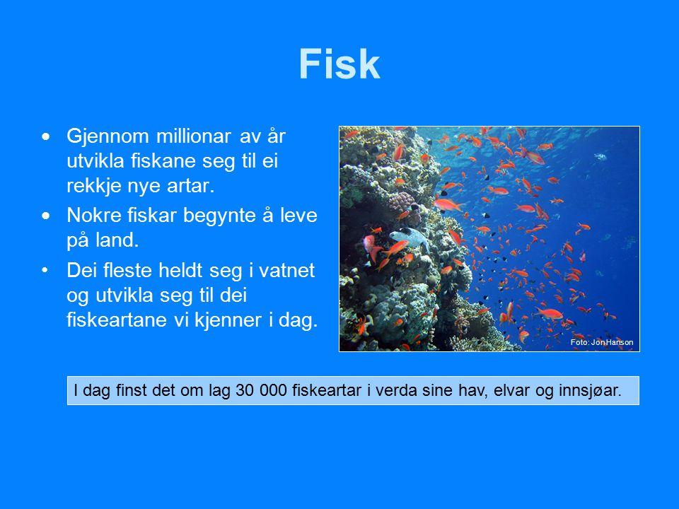 Fisk  Gjennom millionar av år utvikla fiskane seg til ei rekkje nye artar.  Nokre fiskar begynte å leve på land. Dei fleste heldt seg i vatnet og ut