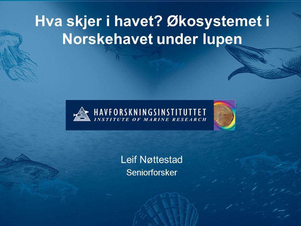 Hva skjer i havet? Økosystemet i Norskehavet under lupen Leif Nøttestad Seniorforsker