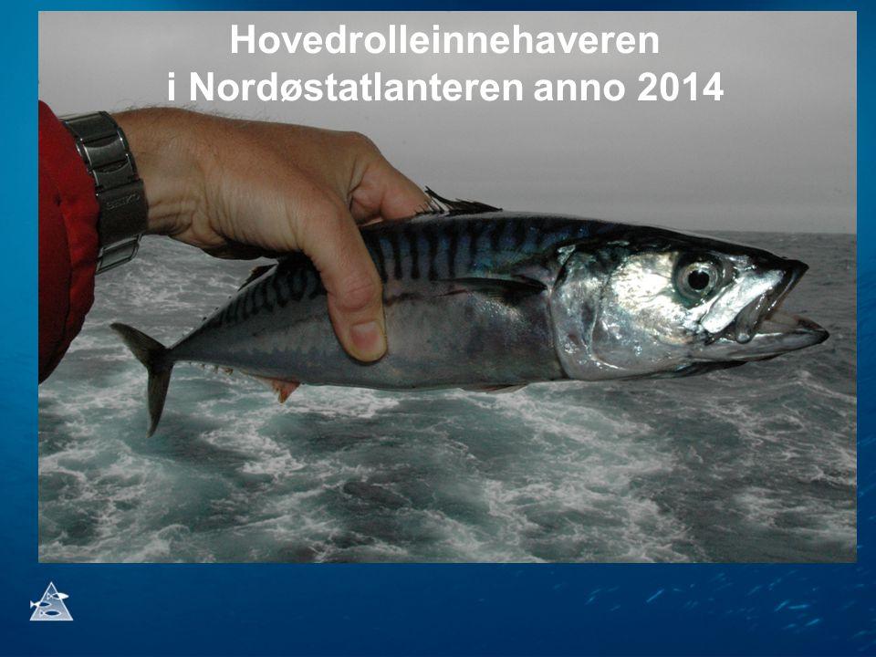 Nordøstatlantisk makrell (Scomber scombrus) Mest verdifulle kommersielle fiskearten i Nordatlanteren med verdiskapning på 10-15 milliarder NOK årlig Tallrik fiskebestand med rekordhøy rekruttering de siste 10 årene Historisk utbredelse om sommeren med betydelig ekspansjon nordover mot Svalbard og vestover i Grønlandsk farvann Spiller en økologisk nøkkelrolle som predator, konkurrent om tilgjengelig mat og byttedyr i flere økosystem i Nordøstatlanteren