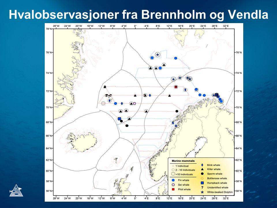 Hvalobservasjoner fra Brennholm og Vendla