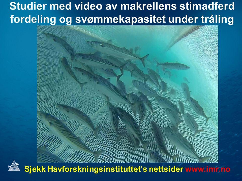 Studier med video av makrellens stimadferd fordeling og svømmekapasitet under tråling Sjekk Havforskningsinstituttet's nettsider www.imr.no