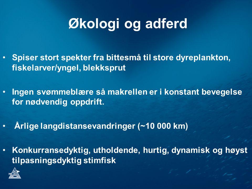 Felles trålmetode for å mengdemåle makrellbestanden Havforskningsinstituttet har utviklet en standarisert trålmetode for mengdemåling av nordøstatlantisk makrell i samarbeid med Island og Færøyene.