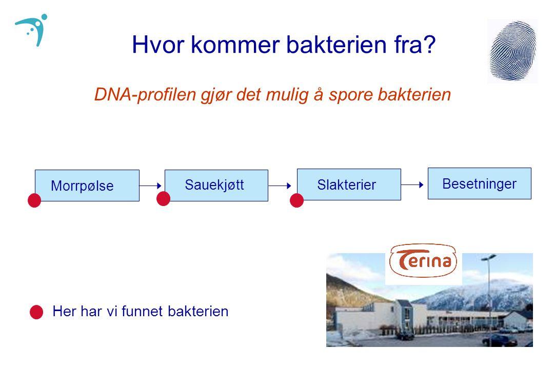 Morrpølse SauekjøttSlakterier Besetninger Hvor kommer bakterien fra? DNA-profilen gjør det mulig å spore bakterien Her har vi funnet bakterien