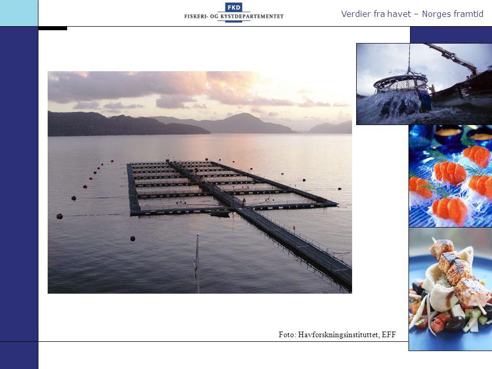 Verdier fra havet – Norges framtid Foto: Havforskningsinstituttet, EFF