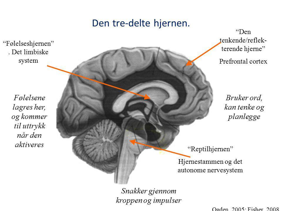 Den tre-delte hjernen. Reptilhjernen Hjernestammen og det autonome nervesystem Følelseshjernen .