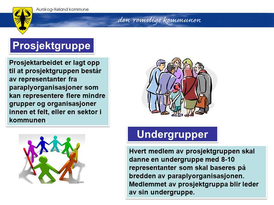 Prosjektarbeidet er lagt opp til at prosjektgruppen består av representanter fra paraplyorganisasjoner som kan representere flere mindre grupper og or